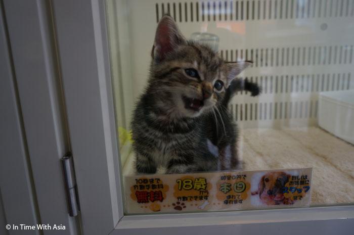 Shibuya_chats_1